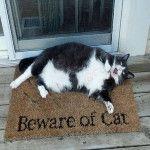 Beware of cat - via @9GAGTweets