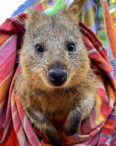 Farm Animals, Cute Animals, Country Critters, Work Meeting, Quokka, Online Work, Brown Bear, Otters, Little Babies