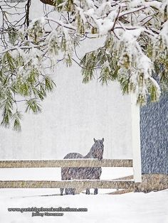 Horse in the snow.