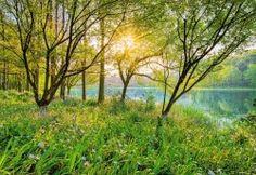 Komar Spring Lake Fotobehang National Geographic 8-524