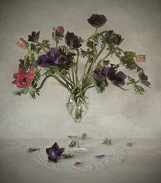 #flowers #floral #stilllife #photography // by Andrei Blank.