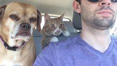 #animal #dog #cat