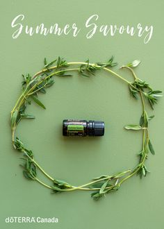 Summer Savory, Doterra Essential Oils, You Got This, How To Find Out, June, The Incredibles, Inspired, Inspiration, Beautiful