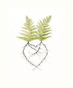 Two Ferns in Love  - Watercolor Painting, print - Newlywed Gift Idea- Engagement - Wedding - Spring Decor - Woodland Forest Roots Heart- by LittleBeanPrints on Etsy https://www.etsy.com/listing/78646382/two-ferns-in-love-watercolor-painting