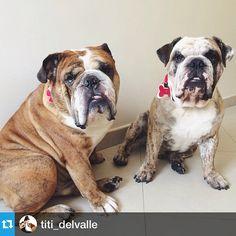 Photo taken by @bulldogs_ccs on Instagram, pinned via the InstaPin iOS App! (10/27/2014)