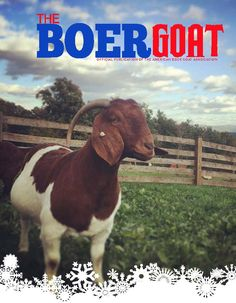 577 Best Boer Goats images in 2019 | Baby goats, Cutest ... - photo#41