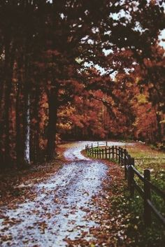 Fall Walks #Autumn