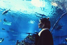 aquarium, photography, and blue εικόνα