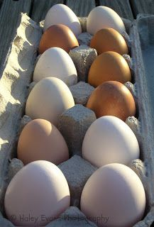 Hobbits, Horses, and Handcrafts: My First Eggs!