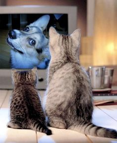 We first noticed it when our little guy was as fixated on Lost as we were every Tuesday night, but it turns out that plenty of pets love watching TV. Whether they're watching Animal Planet or just run to the door barking whenever they hear an on-screen doorbell, does your pet tune in to your TV?