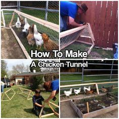 How To Make A Chicken Tunnel