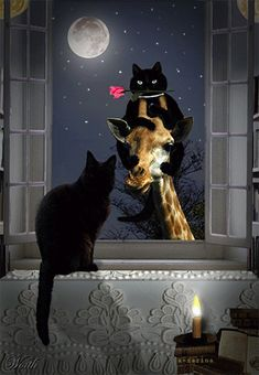 Love conquers all . but a giraffe helps ! - Love conquers all …. but a giraffe helps ! Love conquers all …. but a giraffe helps ! Cool Cats, I Love Cats, Crazy Cats, Gatos Cool, Black Cat Art, Black Cats, Cat Drawing, Cats And Kittens, Funny Cats