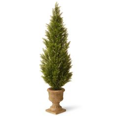 National Tree Company 60-inch Arborvitae with Urn