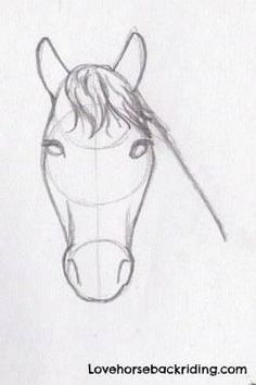 For horse pencil drawings, adding the shading to horse head is the last step. Create Sketches step by step - Beginner Horse drawings - Horse Back Riding Tips - Top 5 Training Tips -  Career Info