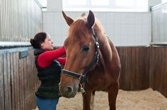 Study: T-Touch 'Positively Accepted' by Saddle Horses