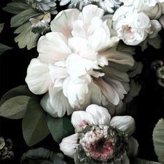 Dark Floral Sample - Floral Wallpaper Samples - by Ellie Cashman Design