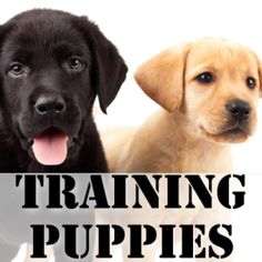 Bow Wow Week: Tips For Bringing New Puppies Home & Crate Training