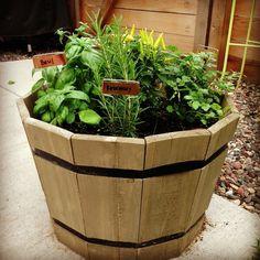 Rosemary....Basil... Sage...Cilantro...Fresh herbs gotta love them!