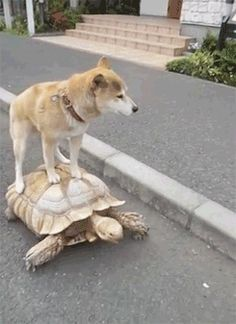 "Slow Ride....Take It Easy!! Haha! That's what I imagine the dog is singing in his head! ""Slow Ride"" by Foghat"