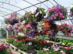 Inside the greenhouse @Cowiche Creek Nursery
