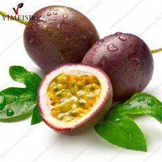 Purple Passion Fruit(Passiflora edulis)Seeds,Rare tropical edible fruit seeds Organic fruit tree seeds for indoor Passion Fruit Benefits, Miel Pur, Maracuja Oil, Creme Anti Age, White Balsamic Vinegar, Fruit Seeds, Tropical Fruits, Saveur, Fresh Fruit