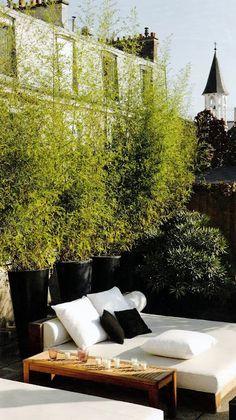 Cacher le vis à vis avec des bambous en pots