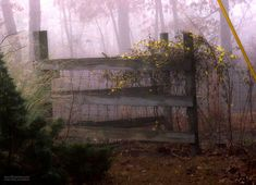 Early morning fog... by marlboromaam