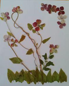 Cuadros con hojas