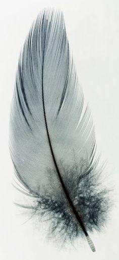 Feathers! www.circuslondonpr.com