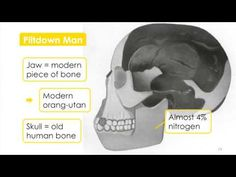 Forensic Science (Hi-res) - 3.1.4 - Analysis of Skeletal Remains I - YouTube