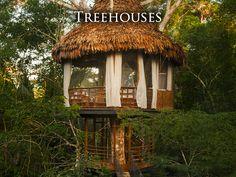 Treehouse Lodge Resort, Iquitos Peru,  Peruvian Amazon