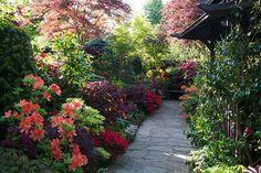 Azalea flowers pagoda path (June 2nd) | par Four Seasons Garden