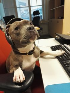 Hello? Yes, this is dog - Imgur