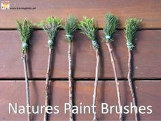 nature's paint brushes!