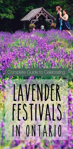 Culinary tourism in Ontario: Lavender Plants and Lavender Festival with Lavender oil recipe, Pineapple Lavender Mojito recipe & Lavender Simple Syrup recipe.