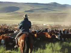 (gauchos) of Argentina, South America. Cattle drive at Buta Mallin Western Riding, Western Art, Cowboy Art, Cowboy And Cowgirl, Patagonia, Cowboy Ranch, Cattle Drive, Gado, Real Cowboys