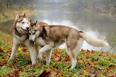 Two beautiful boys #cute #dogs #dog #aww #puppy #adorable