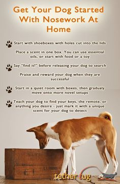 Useful Dog Obedience Training Tips – Dog Training Dog Training Techniques, Dog Training Tips, Potty Training, Training Classes, Training Videos, Service Dog Training, Agility Training, Crate Training, Training Equipment