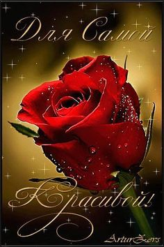 Любовь Миронович (@1006198425) | Твиттер Beautiful Love Pictures, Beautiful Flowers, Animated Heart, Best Urdu Poetry Images, Rose Images, Happy B Day, Happy Birthday Wishes, True Friends, My Flower