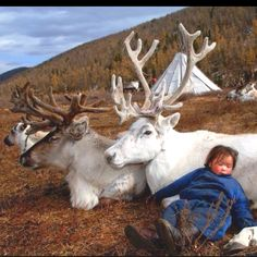 Child sleeps next to reindeer, Mongolia
