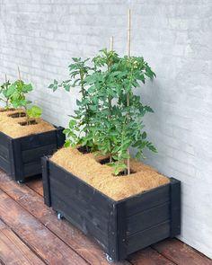 Tomato Pruning, Herb Garden, Gardening Tips, Planting Flowers, Herbs, Planter, Compost, Herbs Garden, Herb