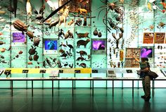The massive fossil collection at the American Museum of Natural History in New York contains some of the rarest finds.