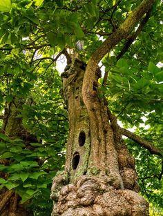 Conoce 10 árboles asombrosos, cada cual con una historia especial