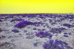 Purple landscape with a yellow sky. The purple and yellow are complementary so the image appears natural.  Source: http://aestheticgoddess.tumblr.com/post/124868260640