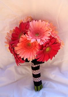 i love gerberas. Really pretty as something different to the usual roses