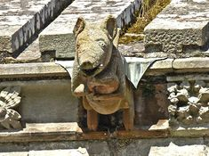 A Pig playing bagpipe on Melrose Abbey, Scotland