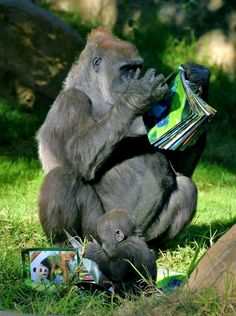 Bookworm Gorillas - Kokomo and Monroe reading about nature (Study Time by Lynnette Fortin, Escondido, CA)