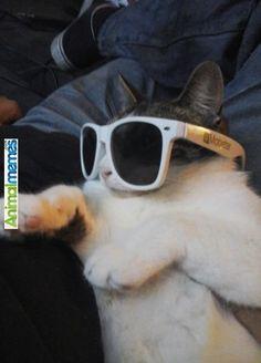 Cat memes Hip Hop Cat... Check more at http://www.animalmemes.com/cat-memes-hip-hop-cat/