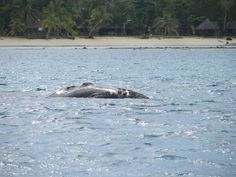 Image result for best surf spots in madagascar