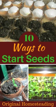 10 Garden Seed Starting Ideas You Must Try: Save Money by starting your own seeds. This is a collection of different ways to begin growing seeds at home! Diy Gardening, Organic Gardening Tips, Gardening For Beginners, Container Gardening, Hydroponic Gardening, Flower Gardening, Gardening Websites, Gardening Services, Container Plants